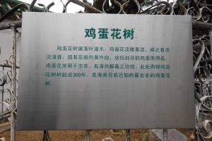 鸡蛋花树 literally translates as Chicken Egg Flower Tree.